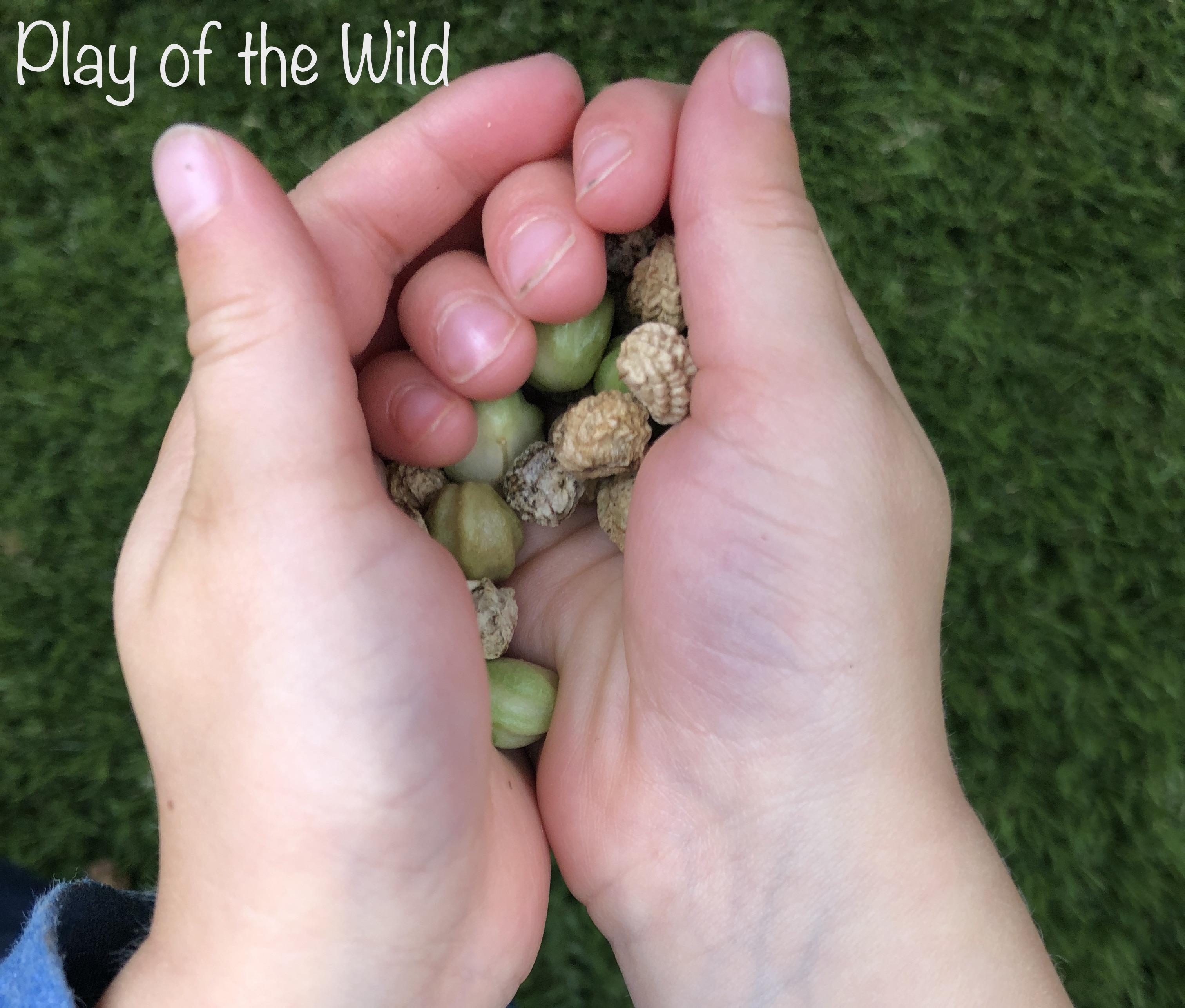 Teaching Kids about Gardening. Collecting Nasturtium seeds.